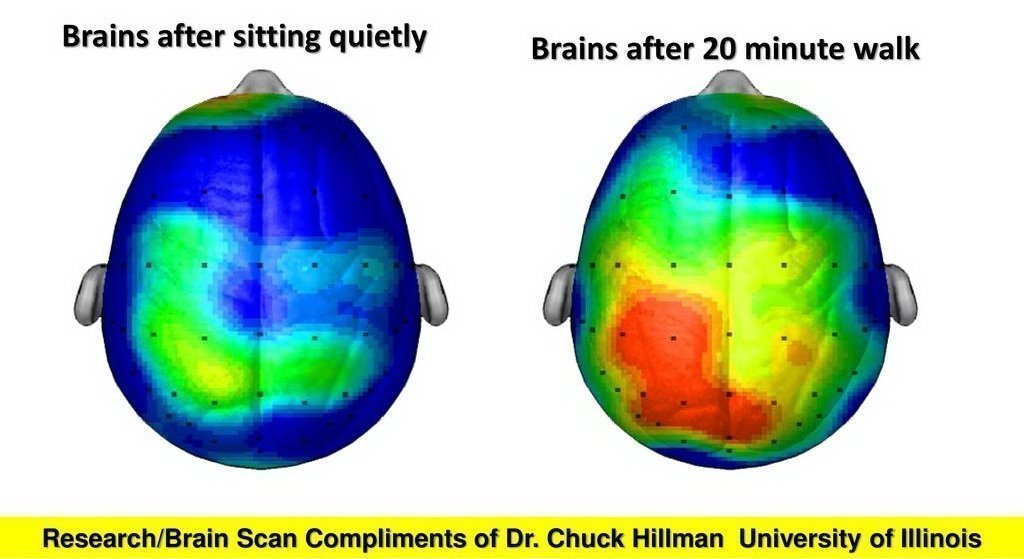 Brains after sitting quietly. Brains after 20 minute walk. Research/Brain Scan Compliments of Dr. Chuck Hillman University of Illinois.
